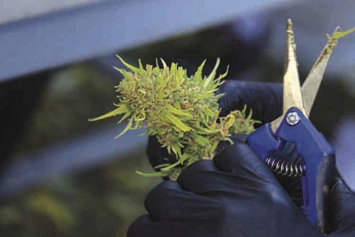 Recreational marijuana still faces logistical challenges news