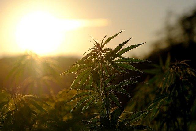 Here's what happens before marijuana becomes legal in Arizona